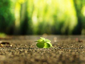Gelebte Resilienz