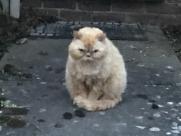 Cat Pet Neighbour